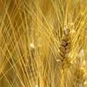 Agricoltura e clima: una relazione sempre attuale